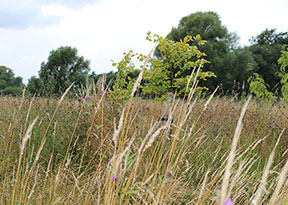 brightwater-green-burial-meadows-woods-lincolnshire-saxby-2