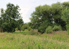 brightwater-green-burial-meadows-woods-lincolnshire-saxby-3